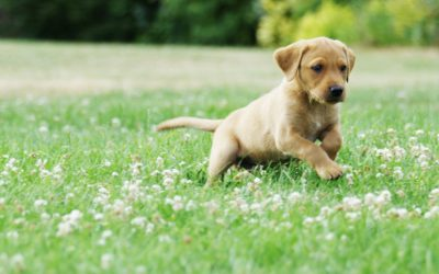 Playful and Adventurous Pups